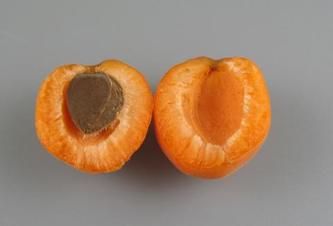 ovoce-07-merunky-bergeron.jpg